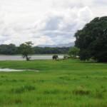 Wild Elephant in SL