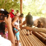 Pr Daniel's children feed elephant